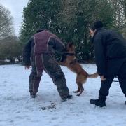 Illustration formation maître chien thésée formation